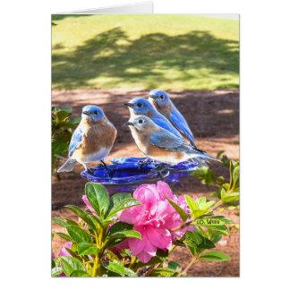 050 dos Bluebirds resíduo metálico do cartão de