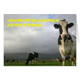 10.000 vacas não podem ser cartão errado