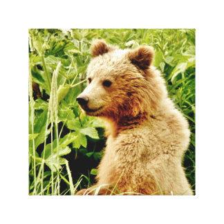 """12"""" X12"""", 1,5"""", único filhote do urso das canvas"""