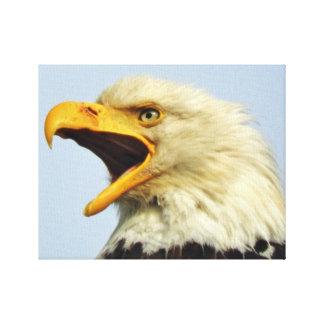 """14"""" x 11"""", 1,5"""", únicas canvas com águia"""