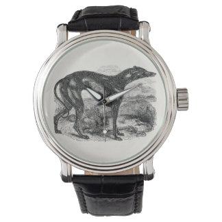 1800s do cão do galgo do vintage - cães dos galgos relógios