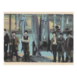1914 cartão do esturjão - captura do esturjão
