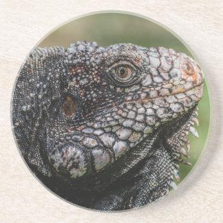 1920px-Iguanidae_head_from_Venezuela Porta-copos De Arenito