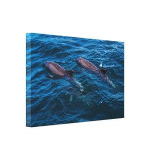 2 golfinhos fora do paraíso dos surfistas impressão em tela