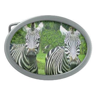 2 zebras bonitos