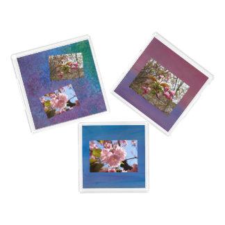 3 bandeja - grupo da foto da flor de cerejeira