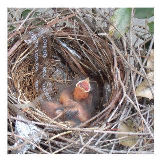 3 pássaros de bebê recém-nascidos em um ninho com impressão de foto