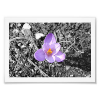 "7"" x 5"", papel profissional da foto de Kodak Impressão De Foto"