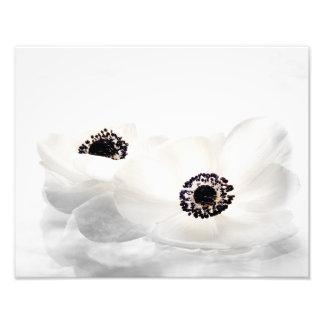 A anêmona branca floresce a flor floral das impressão de foto