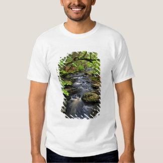 A angra corre através da floresta t-shirt