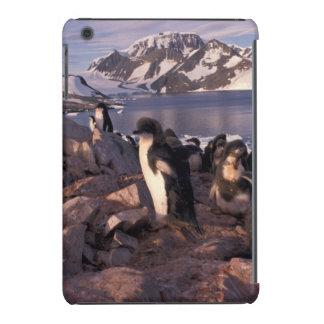 A Antártica, pintinhos do pinguim de Adelie Capa Para iPad Mini Retina