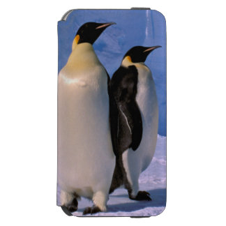A Antártica, território antárctico australiano, 7