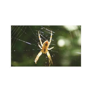A aranha dourada esticou a cópia das canvas impressão de canvas esticadas