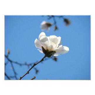 A arte da foto do céu azul imprime a flor branca d