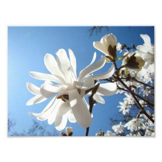A arte da fotografia imprime flores da magnólia do