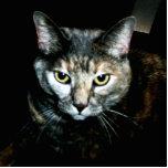 A arte do gato fotoescultura