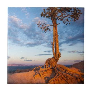 A árvore adere-se à borda, parque nacional da