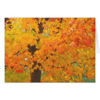 A árvore de bordo da queda abre caminho o cartão 6