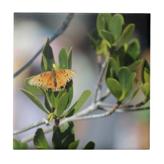 A borboleta azulejos