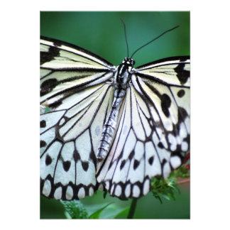 A borboleta branca convites personalizado