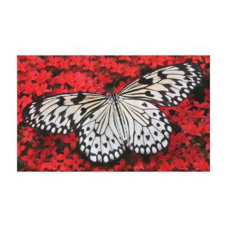 A borboleta da ninfa da árvore no vermelho