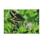A borboleta de Swallowtail esticou o impressão das Impressão Em Canvas