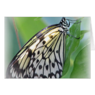 A borboleta voa o cartão
