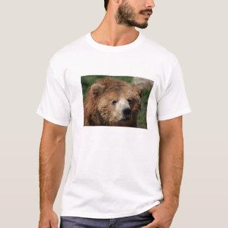 A camisa dos homens do urso de Brown do Kodiak