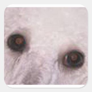 a caniche eyes o branco adesivo quadrado