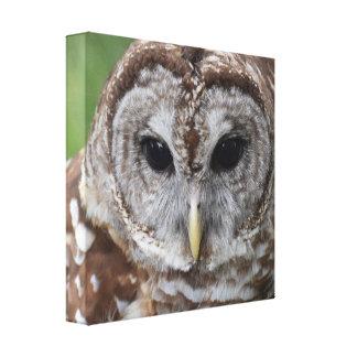 A coruja -- arte das canvas - coruja barrada impressão em tela