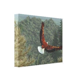 A descolagem de Eagle Impressão De Canvas Envolvidas