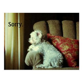 "A desculpa card~when ""pesaroso"" di-lo cartão postal"