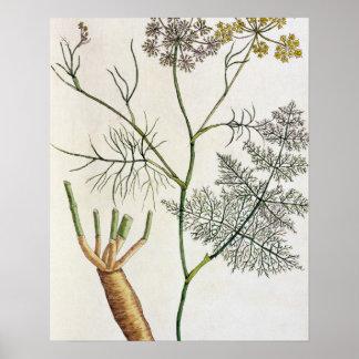 """A erva-doce, chapeia 288 """"de um erval curioso"""", pu poster"""