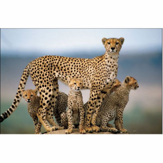 A família de gato! fotoesculturas