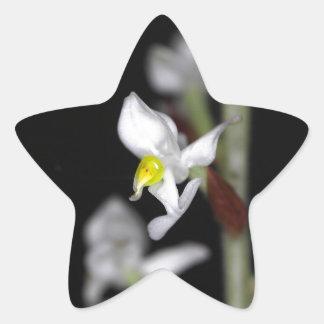 A flor da orquídea Ludisia descolora-se Adesivo Estrela