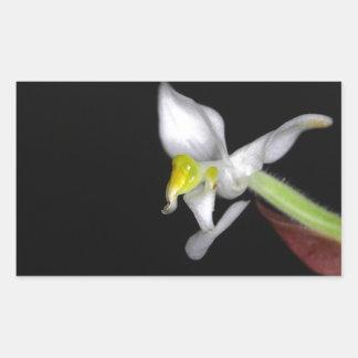 A flor da orquídea Ludisia descolora-se Adesivo Retangular