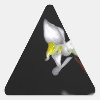 A flor da orquídea Ludisia descolora-se Adesivo Triangular