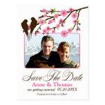A flor de cerejeira e a foto dos pássaros do amor  cartao postal
