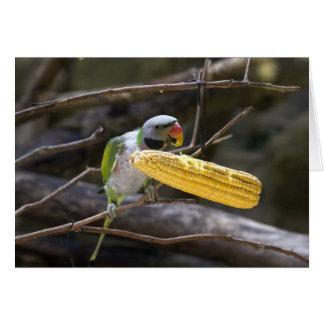 A flor dirigiu o cartão do Parakeet