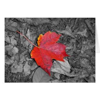 A folha de bordo cartoes