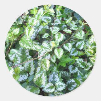 A folha verde   sae da etiqueta das plantas de  