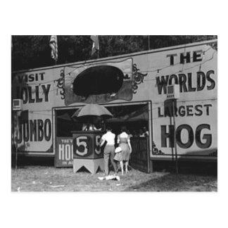A foto a maior do carnaval do vintage do porco do cartão postal
