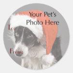 A foto do seu animal de estimação em nomes de adesivos em formato redondos