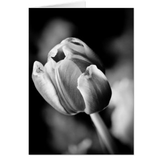 A foto intrigante da tulipa faz um cartão emociona