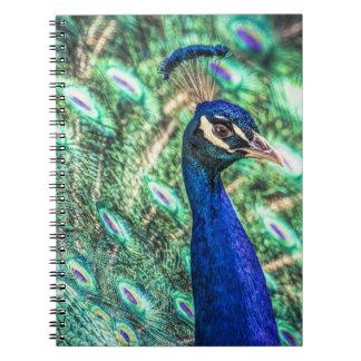 A luminosidade no azul &Green o caderno do pavão