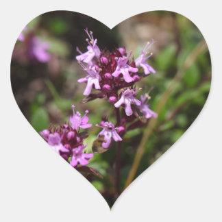 A mãe de tomilho floresce (o praecox do Thymus) Adesivo Coração