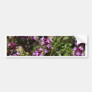 A mãe de tomilho floresce (o praecox do Thymus) Adesivo De Para-choque