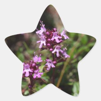 A mãe de tomilho floresce (o praecox do Thymus) Adesivo Estrela