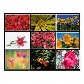 A maioria de cartão bonito da colagem das flores