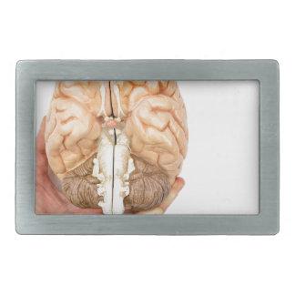 A mão guardara o cérebro humano modelo no fundo